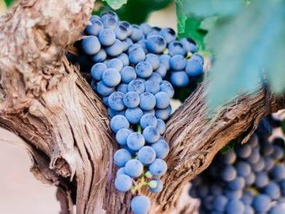 El que permanece en mí y yo en él, ese da fruto abundante Image