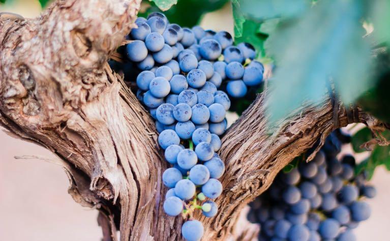 El que permanece en mí y yo en él, ese da fruto abundante imagen