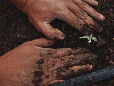 Ingenieros agrónomos, más allá del servicio a la naturaleza Image