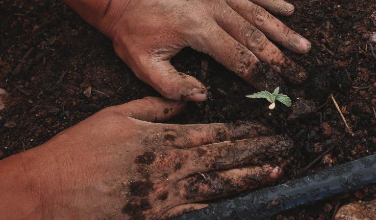 Ingenieros agrónomos, más allá del servicio a la naturaleza imagen